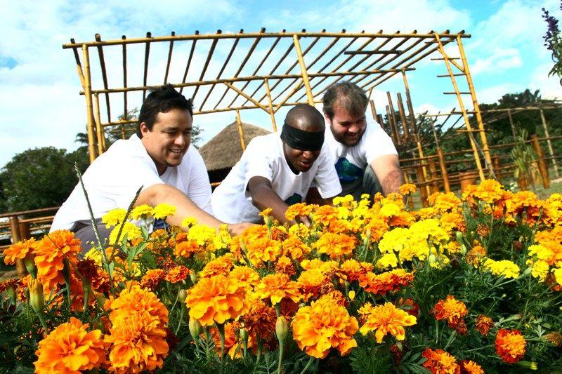 flores do jardim botanicoJardim Botânico de Campinas promove visitas