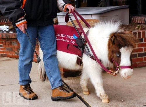 The American Disabilities Act protects service animals, saying they can go anywhere their owners go