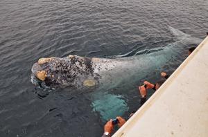 Dizem que baleias e outros animais marinhos se aproximam do barco, atraídos pelas pessoas com deficiência