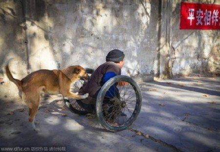 Big Yellow aprendeu sozinha a empurrar a cadeira de rodas do tutor para levá-lo e buscá-lo no trabalho todos os dias