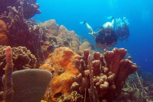 BUCEAR EN EL CARIBE COLOMBIANO COMO TERAPIA PARA El director de Diving Planet, Andrés Obregón, creó esta experiencia de buceo recreativo para personas con discapacidadLAS LIMITACIONES
