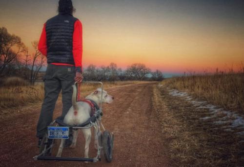 Com a cadeira de rodas Mel passou a acompanhar seu tutor em viagens por todo o país.