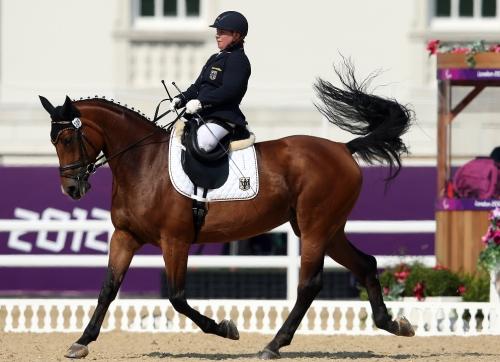 Os cavalos têm passaporte próprio – com descrição física detalhada, lista de competições disputadas e vacinas tomadas