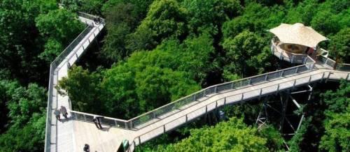 um-passeio-pela-copa-das-arvores-possibilita-cadeirantes-ter-vista-privilegiada-no-hainich-national-park